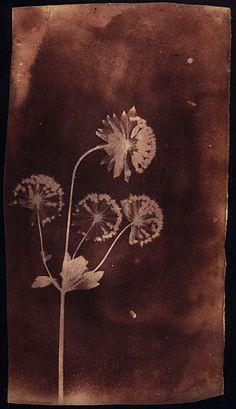 Project Blog   William Henry Fox Talbot Catalogue Raisonné   Page 2