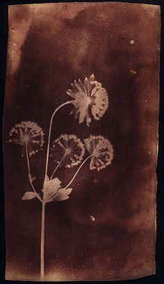 Project Blog | William Henry Fox Talbot Catalogue Raisonné | Page 2