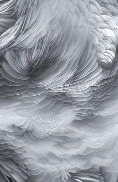 Rowan Mersh 2014 / abstract feather photograph / color inspiration / black and white / monochromatic / texture / pattern / nature / art Textile Texture, Texture Art, White Texture, Feather Texture, Textures Patterns, Color Patterns, Organic Forms, Organic Patterns, Textiles