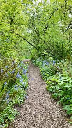 Walking through a sunny bluebell meadow in
