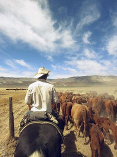 *cattle drive~~A cowboy's job is never done