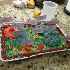 3D cell model -made out of candy and homemade rice crispy treat. - took under an hour