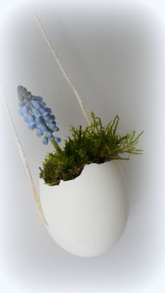 Broken eggshell vase with moss and grape hyacinth, very Spring like
