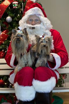 Santa came to visit us at Camp last month for pictures with the pups! Over $ 1,100 was raised for the Capital Humane Society!