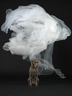 Cloud William Wegman