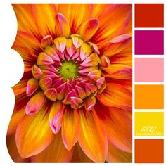 Inspirational Colors by Ilonka's Scrapbook Designs