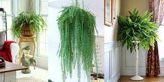 Saveti & Zanimljivosti — Uređenje doma i održavanje cveća