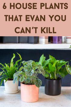 Shade Garden Plants, House Plants Decor, Plant Decor, Indoor Plants, Garden Yard Ideas, Garden Projects, Projects To Try, Growing Plants Indoors, Growing Vegetables