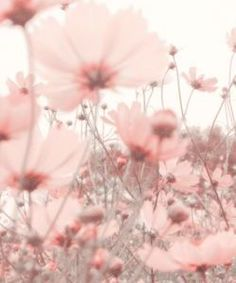 Iphone Wallpaper - Parures Housses de Couette Floral - Iphone and Android Walpaper Wallpaper Pastel, Aesthetic Pastel Wallpaper, Aesthetic Backgrounds, Aesthetic Wallpapers, Nature Wallpaper, Baby Pink Wallpaper Iphone, Spring Flowers Wallpaper, Wallpaper Lockscreen, Rose Wallpaper