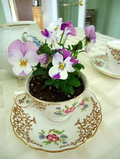 Great idea for Mothers day gift or a hostess gift. Tea cup planter.