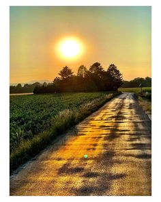 #sunny #road ## Sunnies, Country Roads, Instagram, Sunglasses, Shades