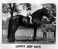 Lippitt Jeep ( Lippitt Sampson X Ne Komia )