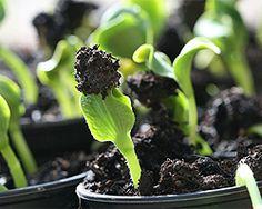 Gartentipps im Januar für Vorkultur