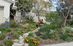 California Native Eco-Friendly Landscaping