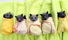 Baby fruit bats! They're so cute