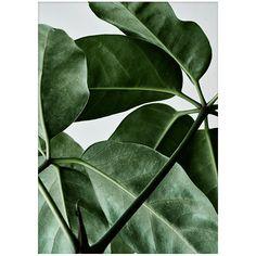 Green Home 01 juliste      Valmistaja: Paper Collective     Design: Riikka Kantinkoski