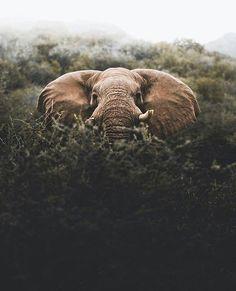 PEEK A BOO |  Ph. Donal Boyd (Namibian Photography)