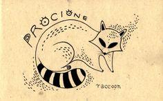 Learning Italian Language ~ Procione (racoon) IFHN