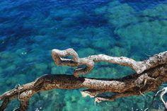 Strahlend blaues Wasser- Santa Eularia, Ibiza