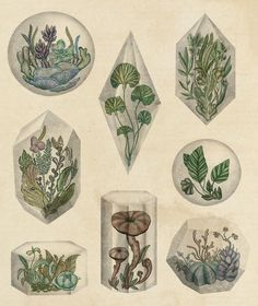 Floating Terrariums botanical illustration by Katie Scott