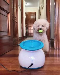 Cute Funny Animals, Cute Baby Animals, Animals And Pets, Cute Puppies, Cute Dogs, Dogs And Puppies, Doggies, Cute Animal Videos, Funny Animal Pictures