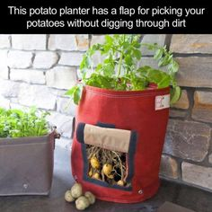 Potato Planter With A Flap