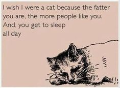 I wish I were a cat because the fatter you are, the more people like you.  And, you get to sleep all day.