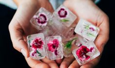 Rose petals in ice cubes is one of the most beautiful and effective treatments. - mindbodygreen.com