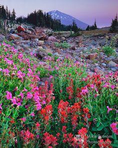 Oregon's Mt Bachelor in summer.  Beautiful!