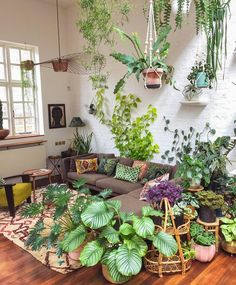 Living room jungle