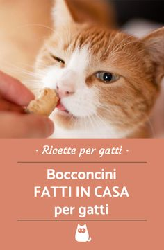 3 ricette di bocconcini per gatti o snack per gatti da offrirgli come premio o per spezzare la routine! Ricette per gatti da leccarsi i baffi! #cats #catlovers #catlady #gatto #gattino #recipe #food #ricetta #foodblog #animali #snack #croccantini #crocchette F2 Savannah Cat, Savannah Chat, Cat Whisperer, Kinds Of Cats, Pets 3, Love Pet, Litter Box, Cat Food, Bocconcini