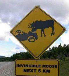 One of the readers posted this in the ALL YOU NEED IS LOVE group. If you were wondering what a true moose-astrophy looks like, here it is! Hope you get a giggle out of this! Now imagine Fred and a tiny Mini Cooper...