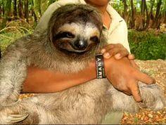 Fat Sloth!