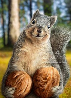 One happy squirrel Smiling Animals, Animals And Pets, Baby Animals, Funny Animals, Cute Animals, Happy Squirrel, Cute Squirrel, Squirrels, Giant Squirrel