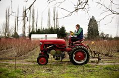 1950s tractor