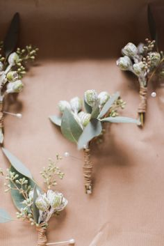 Native buttonhole, tetra nut buttonhole - love these and silver gum nuts Groomsmen Buttonholes, Groom Boutonniere, Wedding Buttonholes, Boutonnieres, Bridesmaid Bouquet, Wedding Bouquets, Wedding Flowers, Bouquet Flowers, Wedding Ideas Board