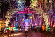 FOREST FESTIVAL 2015