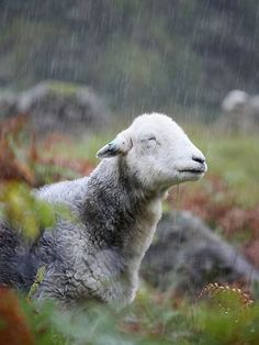taken near Derwent Water in the Lake District - she looks like she is enjoying the rain!