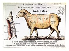 Mutton: Diagram Depicting the Different Cuts of Meat Giclee Print at AllPosters.com