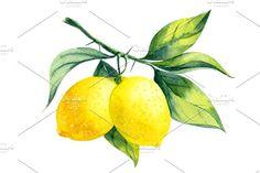 Limoness Lemon Art, Lemon Watercolor, Lemon Painting, Watercolor Food, Fruit Painting, Fabric Painting, Watercolour Painting, Painting & Drawing, Watercolor Stickers