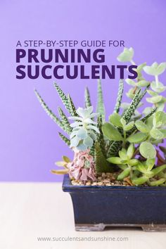 Container Gardening Learn how and when to prune your succulents, plus some basic maintenance tips - Pruning succulents helps prevent rot, encourage new growth, and help your succulents thrive. Discover how and when to prune your succulents here! How To Water Succulents, Succulent Landscaping, Types Of Succulents, Propagating Succulents, Growing Succulents, Succulent Gardening, Succulents In Containers, Succulent Terrarium, Planting Succulents