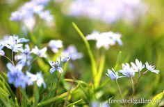 Blumen auf einer grünen Wiese - freestockgallery.de