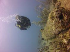 Diving, Nature, Travel, Naturaleza, Viajes, Scuba Diving, Trips, Off Grid, Natural