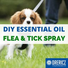 Prevent fleas and ticks with essential oils in this easy DIY solution. Mix and store in a glass spray bottle to use on your dogs before sending them outside.