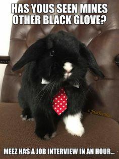 Life is good, bunnies make it better! Bunny Meme, Funny Bunnies, Baby Bunnies, Cute Bunny, Bunny Puns, Cutest Bunnies, Funny Rabbit, Funny Animal Memes, Animal Quotes