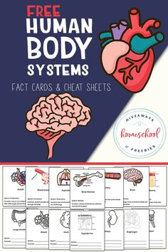 Human Body Systems Fact Cards. Human Body Lesson, Human Body Science, Human Body Facts, Human Body Activities, Human Body Unit, Human Body Systems, Science Resources, Science Lessons, Science Notes