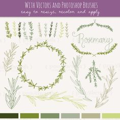 Rosemary Sprigs Clip Art // Photoshop Brushes // Hand Drawn Elements // Herbal Foliage Leaves Twigs Branches // Vector // Commercial Use