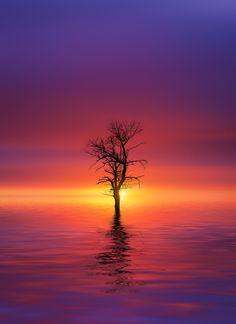 Sunset at lake - null