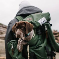 Tag me if you want to be featured Unique Pawrent Hoodies and TShirts Printed in USA Link Shhop in my profile   Credit pointeroftheday : We'd take this pup with us everywhere wins #pointeroftheday #germanshorthairedpointer . . . . . . . . . . #pointers #dogsthatpoint #pointersofinstagram #gundog #pointer #birddog #hunting #huntingdog #pointerdog #pointer_feature #pointergram #pointersofig #pointerlove #dog #dogs #dogsofinstagram #dogstagram #puppies #puppy #puppyoftheday #gsp #gspoftheday #su