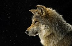 We all know National Geographic —it's the beacon of beauty in the natural world. This collection of photography captures the wild's most wonderful creatures in uniquely intimate ways, available here in a gorgeous collection of mounted prints. You...